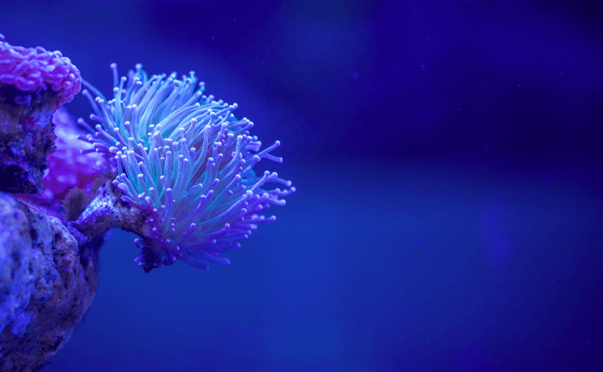 wetsuit material: macro photography of white coral