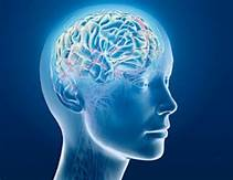 Memory and Cognitive Function