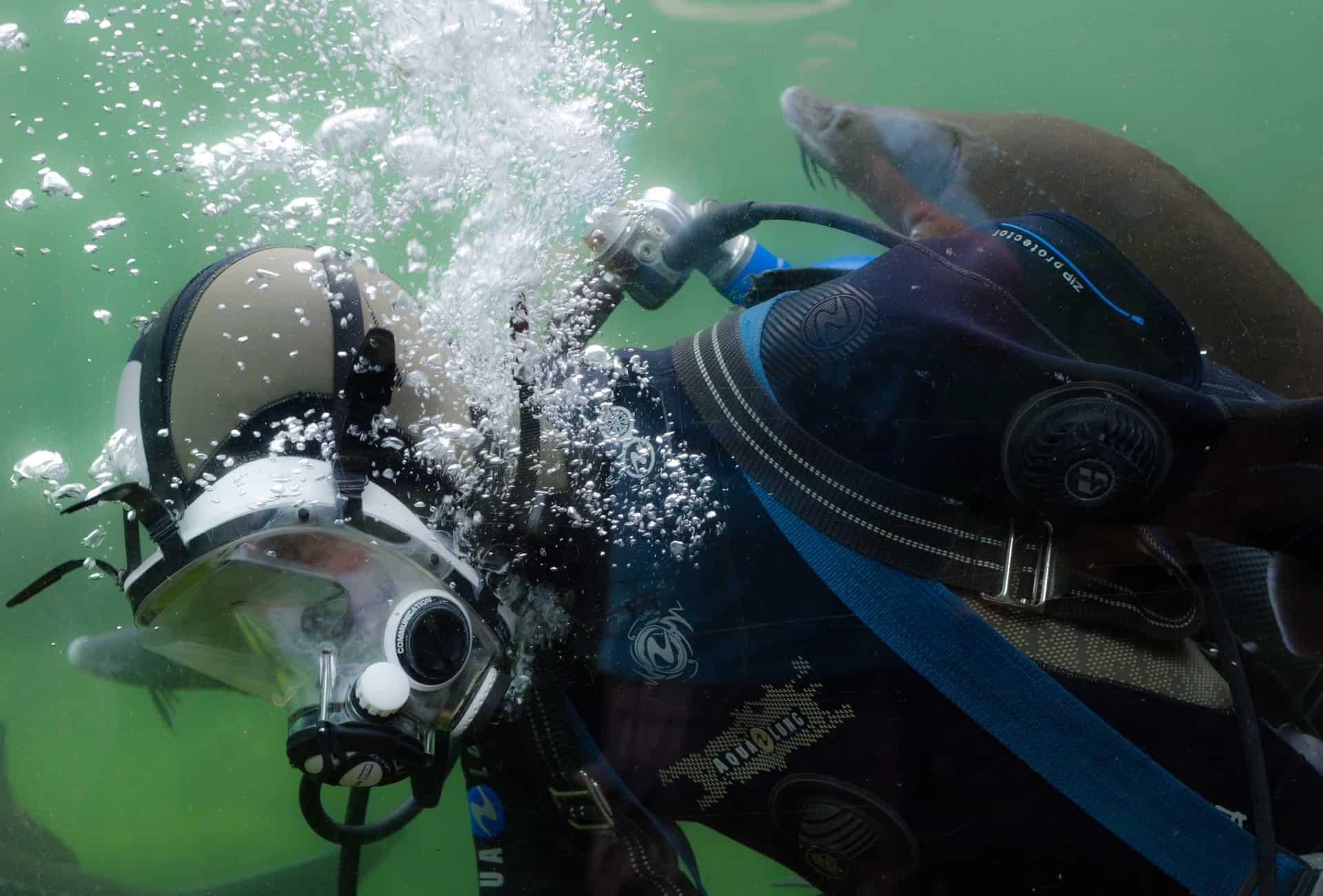 scuba diver with sea animal