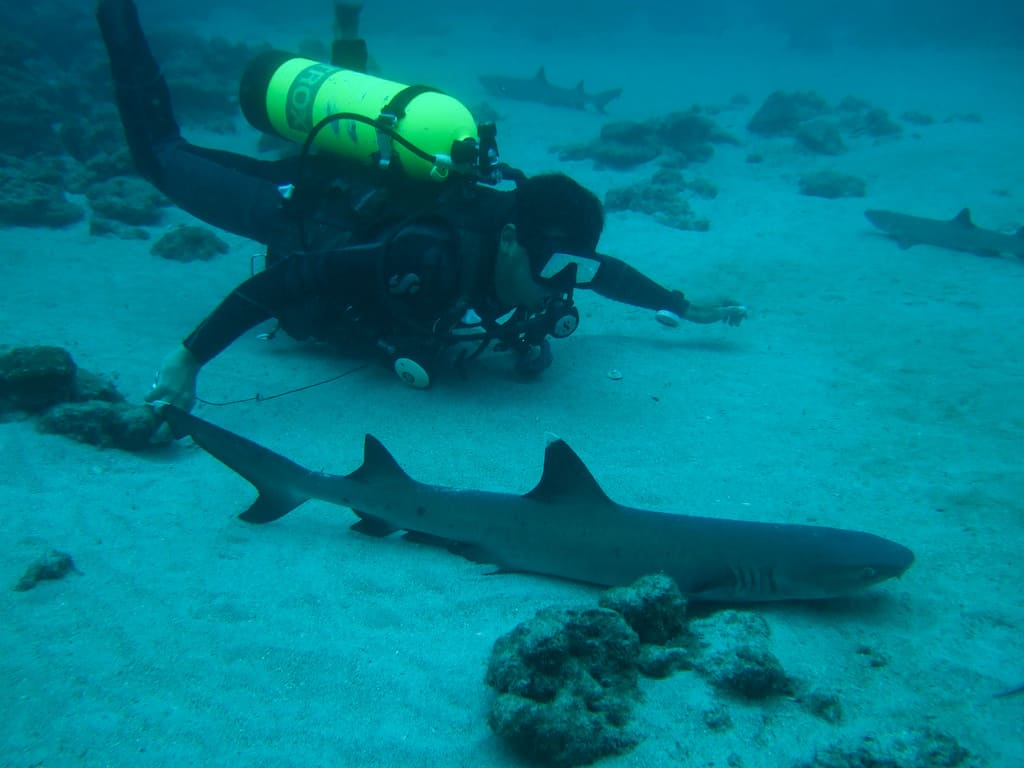 coco island costa rica diver with small shark on the side