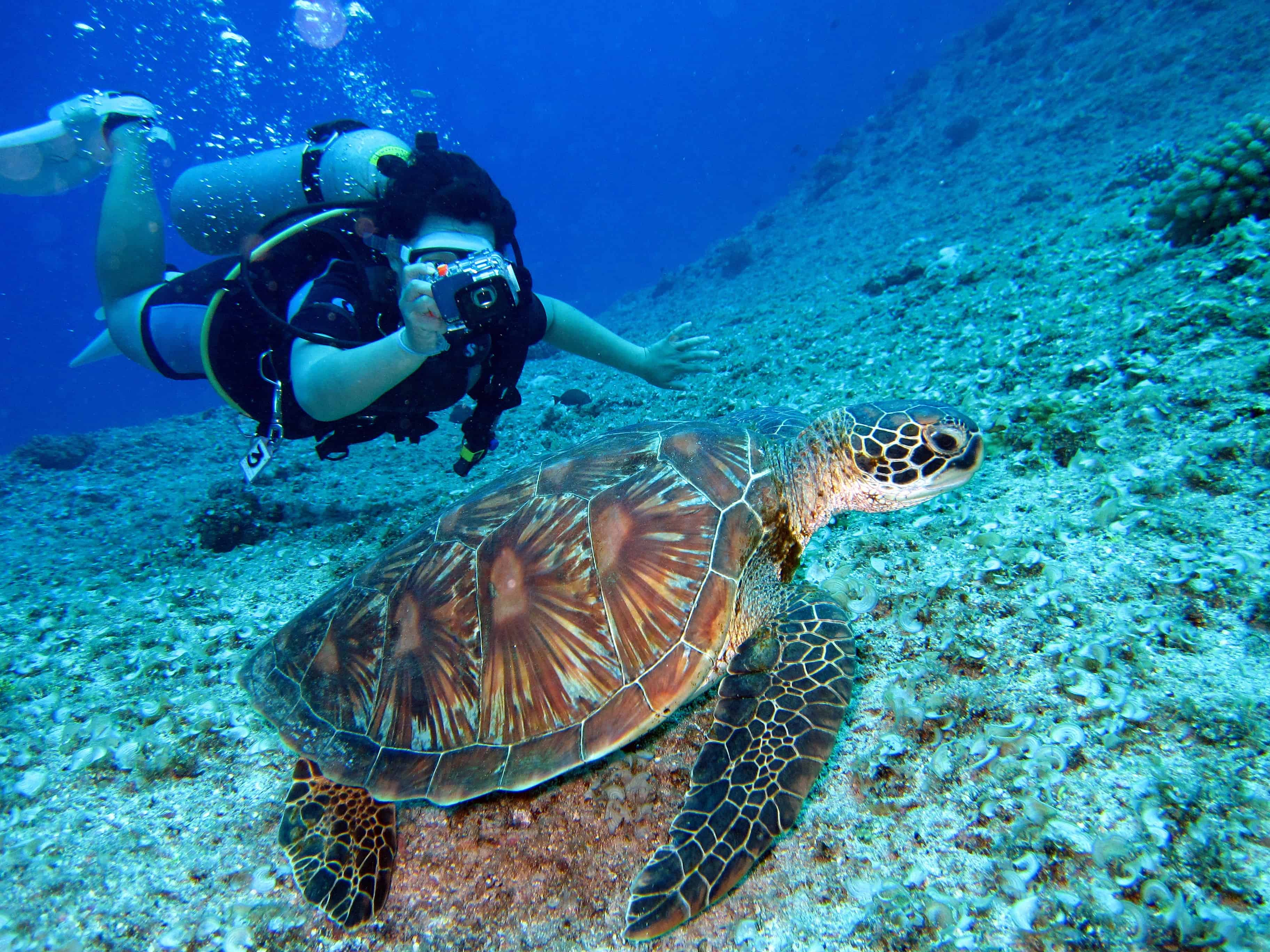 diver taking picture of a sea turtle