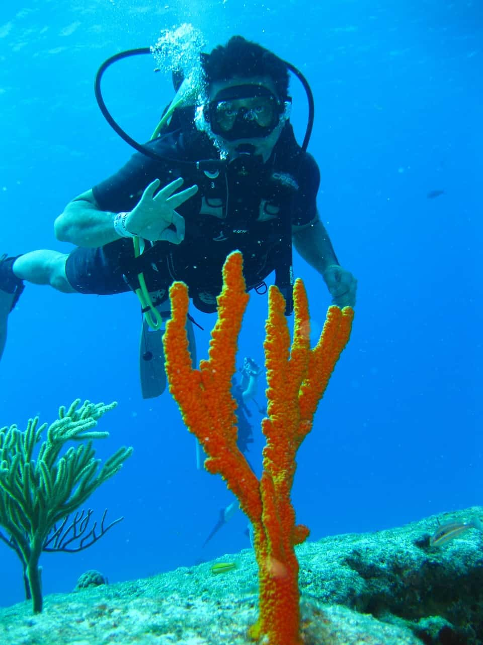 diver with a big coral