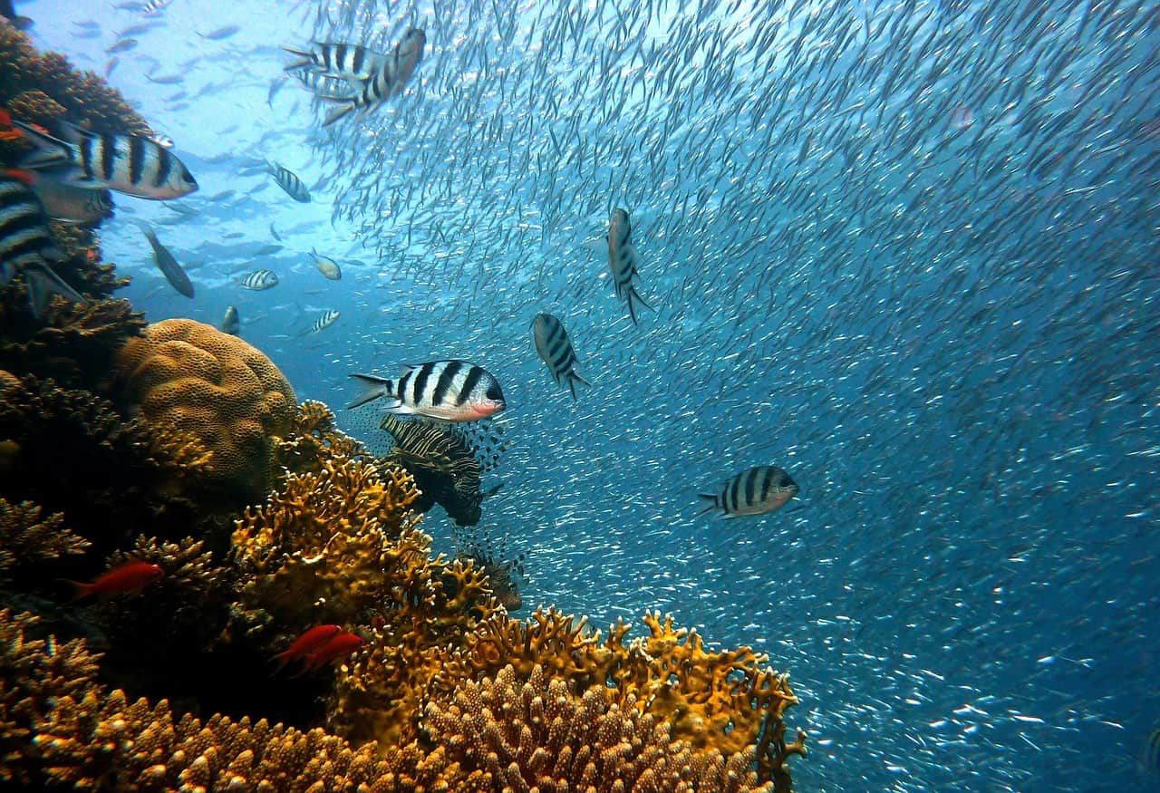 school of fish and corals