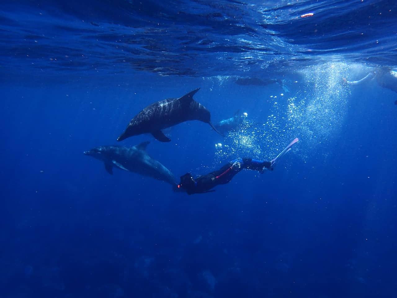diving in a blue ocean