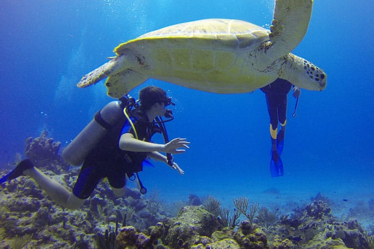 scuba diving with a turtle